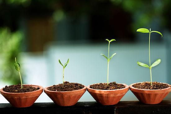 成功」は約束されないが「成長」...